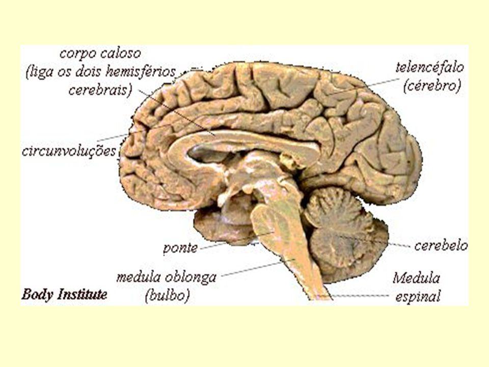 APRENDIZAGEMAPRENDIZAGEM Necessita da integridade das funções do sistema nervoso central (armazenamento, integração, formulação e regulação) e funções