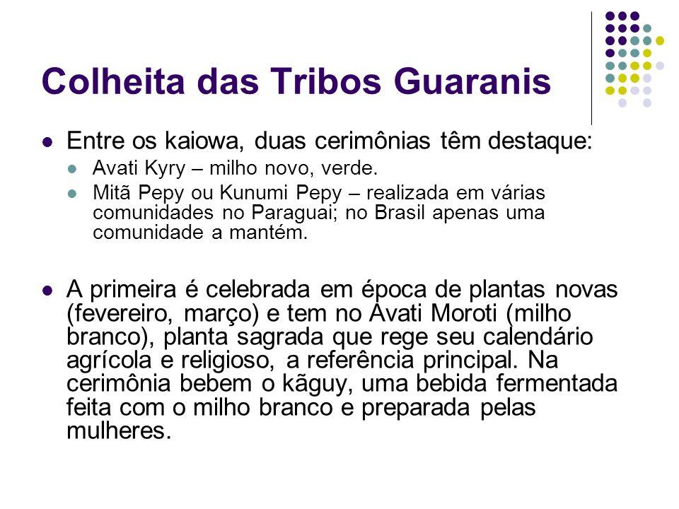 Colheita das Tribos Guaranis Entre os kaiowa, duas cerimônias têm destaque: Avati Kyry – milho novo, verde. Mitã Pepy ou Kunumi Pepy – realizada em vá