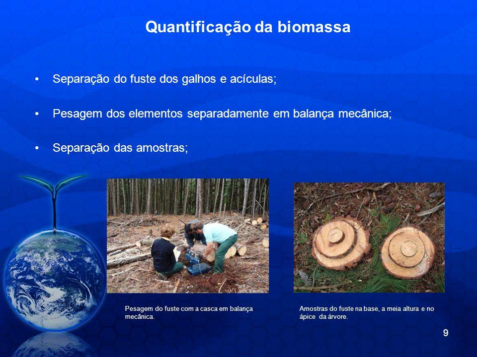 Quantificação da biomassa Separação do fuste dos galhos e acículas; Pesagem dos elementos separadamente em balança mecânica; Separação das amostras; Pesagem do fuste com a casca em balança mecânica.