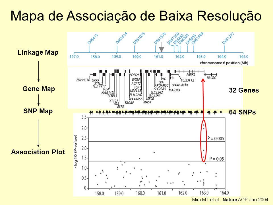 Association Plot Mapa de Associação de Baixa Resolução Linkage Map SNP Map 64 SNPs Gene Map 32 Genes Mira MT et al., Nature AOP, Jan 2004