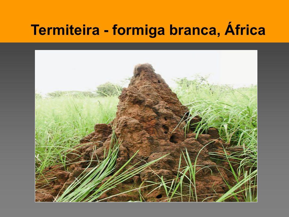 Pensar Azul Texto Editores Termiteira - formiga branca, África