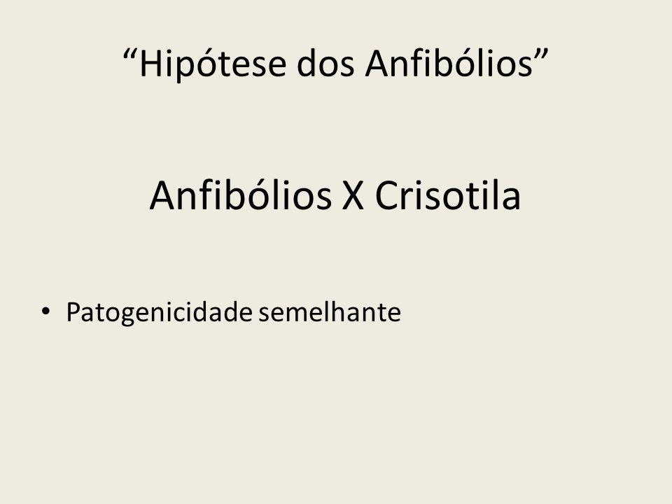 Hipótese dos Anfibólios Anfibólios X Crisotila Patogenicidade semelhante