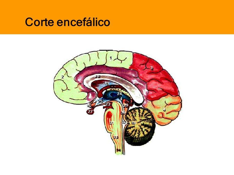 Pensar Azul Texto Editores Corte encefálico
