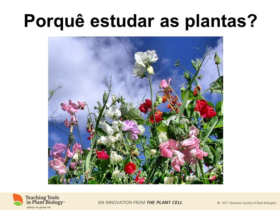 Porquê estudar as plantas? www.plantcell.org/cgi/doi/10.1105/tpc.109.tt1009