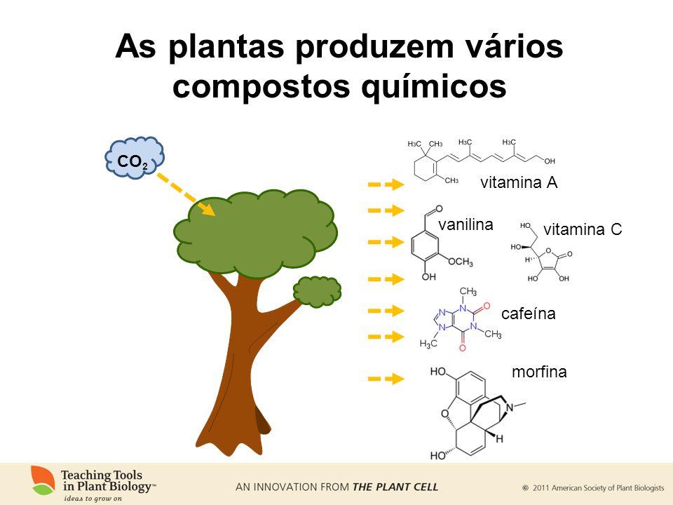 As plantas produzem vários compostos químicos vitamina A vitamina C vanilina cafeína morfina CO 2