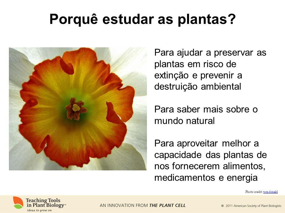 Porquê estudar as plantas? Para ajudar a preservar as plantas em risco de extinção e prevenir a destruição ambiental Para saber mais sobre o mundo nat