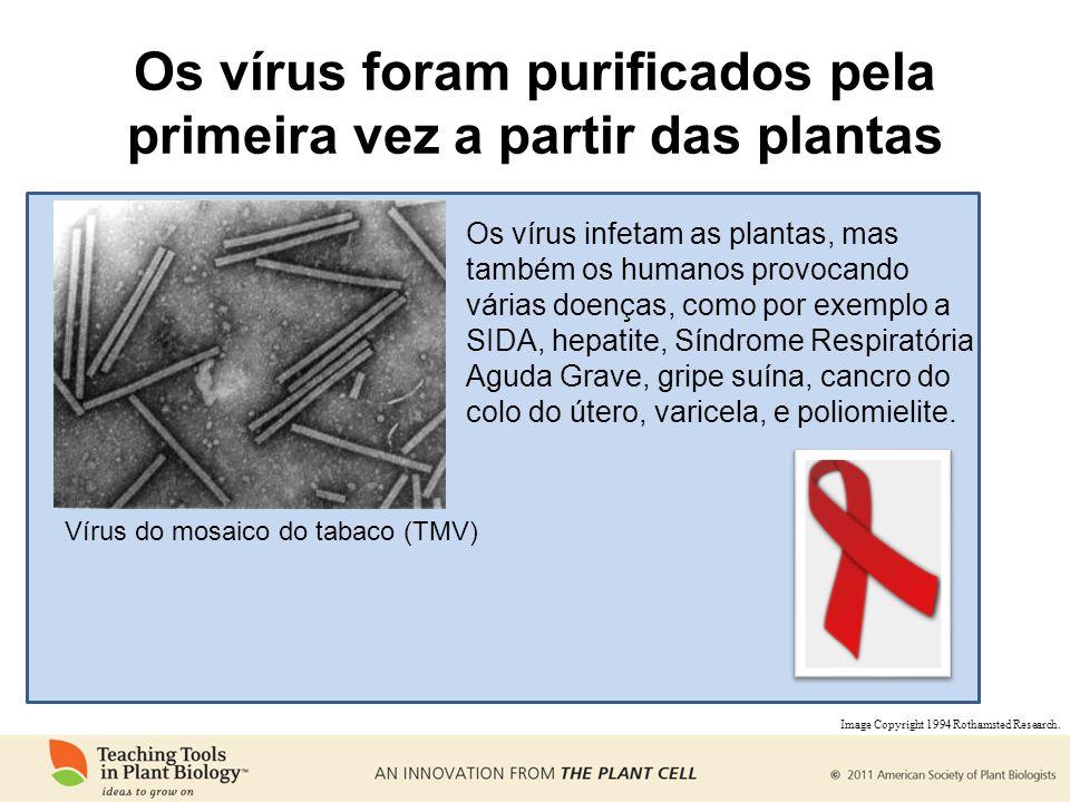 Os vírus foram purificados pela primeira vez a partir das plantas Vírus do mosaico do tabaco (TMV) Os vírus infetam as plantas, mas também os humanos provocando várias doenças, como por exemplo a SIDA, hepatite, Síndrome Respiratória Aguda Grave, gripe suína, cancro do colo do útero, varicela, e poliomielite.