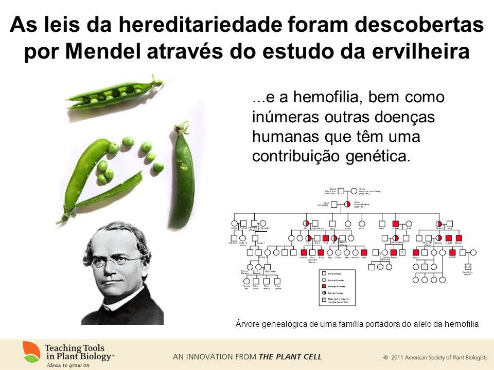 ...e a hemofilia, bem como inúmeras outras doenças humanas que têm uma contribuição genética. Árvore genealógica de uma família portadora do alelo da