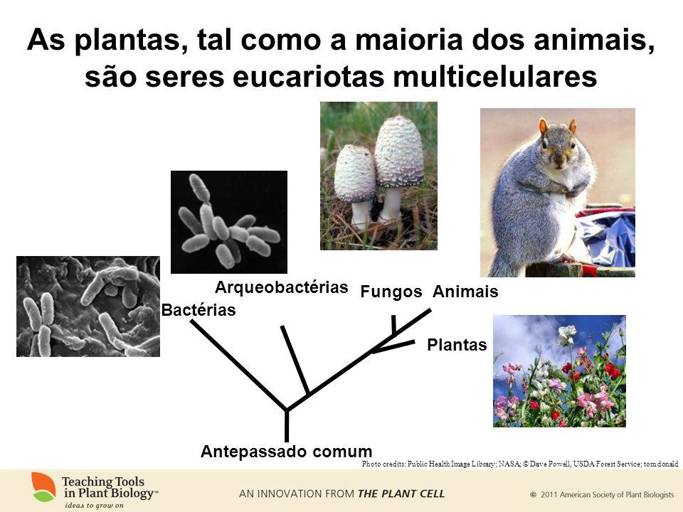 Bactérias Arqueobactérias Animais Plantas Fungos Antepassado comum Photo credits: Public Health Image Library; NASA; © Dave Powell, USDA Forest Service; tom donald As plantas, tal como a maioria dos animais, são seres eucariotas multicelulares