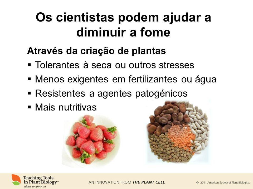 Através da criação de plantas Tolerantes à seca ou outros stresses Menos exigentes em fertilizantes ou água Resistentes a agentes patogénicos Mais nut