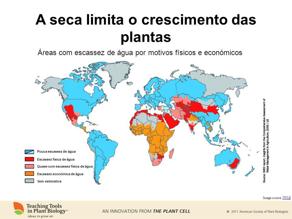A seca limita o crescimento das plantas Image source: IWMIIWMI Áreas com escassez de água por motivos físicos e económicos Pouca escassez de água Escassez física de água Quase com escassez física de água Escassez económica de água Sem estimativa