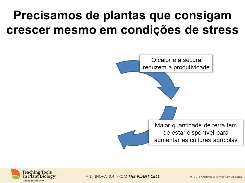 Precisamos de plantas que consigam crescer mesmo em condições de stress Maior quantidade de terra tem de estar disponível para aumentar as culturas ag