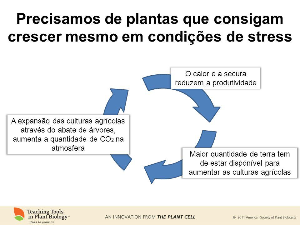 Precisamos de plantas que consigam crescer mesmo em condições de stress A expansão das culturas agrícolas através do abate de árvores, aumenta a quant