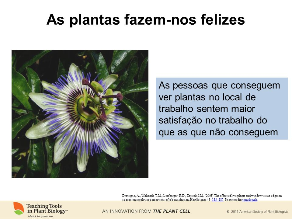 As plantas fazem-nos felizes Dravigne, A., Waliczek, T.M., Lineberger, R.D., Zajicek, J.M. (2008) The effect of live plants and window views of green
