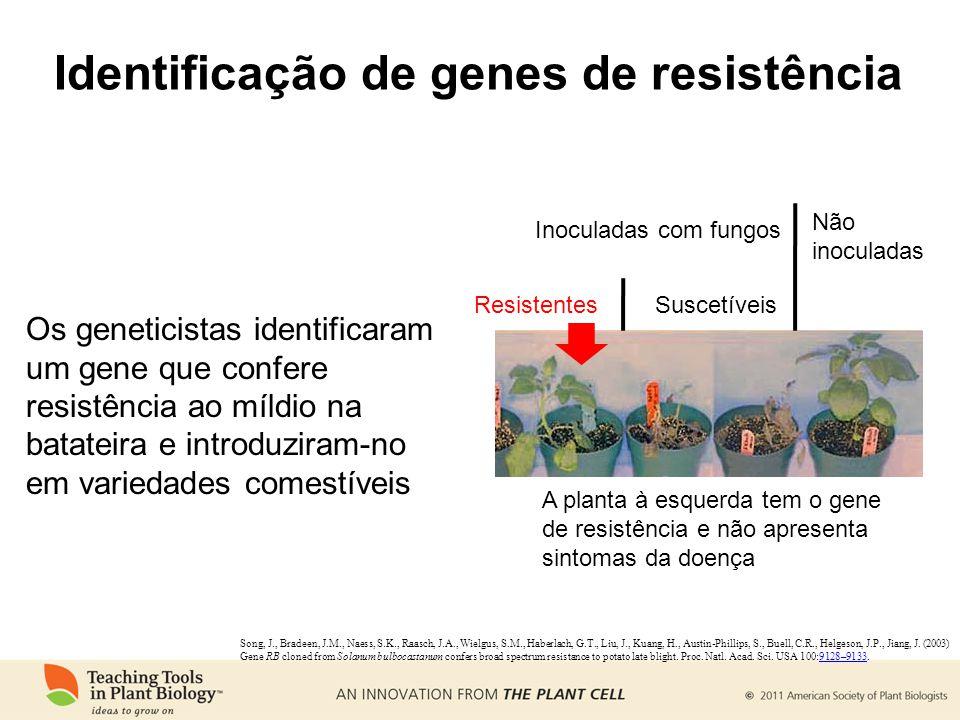 Identificação de genes de resistência Resistentes Inoculadas com fungos Não inoculadas Suscetíveis A planta à esquerda tem o gene de resistência e não apresenta sintomas da doença Song, J., Bradeen, J.M., Naess, S.K., Raasch, J.A., Wielgus, S.M., Haberlach, G.T., Liu, J., Kuang, H., Austin-Phillips, S., Buell, C.R., Helgeson, J.P., Jiang, J.