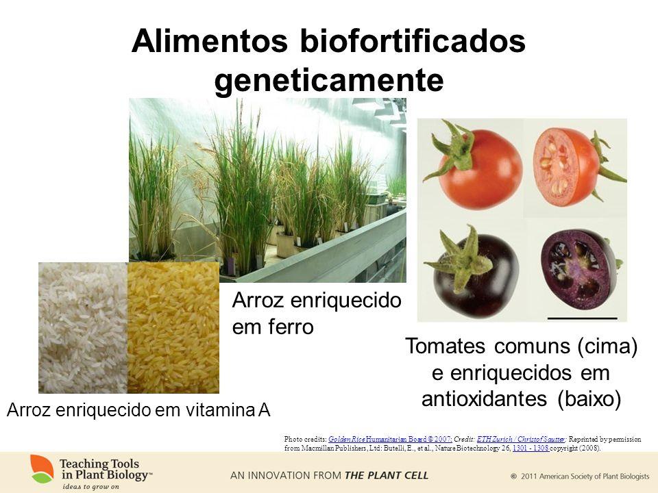Alimentos biofortificados geneticamente Arroz enriquecido em ferro Tomates comuns (cima) e enriquecidos em antioxidantes (baixo) Photo credits: Golden