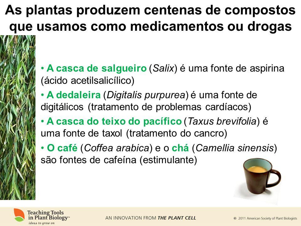 As plantas produzem centenas de compostos que usamos como medicamentos ou drogas A casca de salgueiro (Salix) é uma fonte de aspirina (ácido acetilsalicílico) A dedaleira (Digitalis purpurea) é uma fonte de digitálicos (tratamento de problemas cardíacos) A casca do teixo do pacífico (Taxus brevifolia) é uma fonte de taxol (tratamento do cancro) O café (Coffea arabica) e o chá (Camellia sinensis) são fontes de cafeína (estimulante)