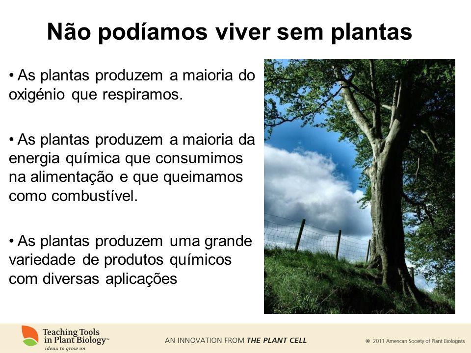 Não podíamos viver sem plantas As plantas produzem a maioria do oxigénio que respiramos. As plantas produzem a maioria da energia química que consumim