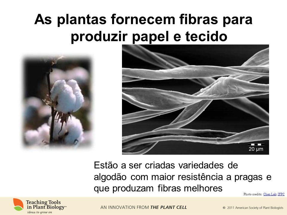 As plantas fornecem fibras para produzir papel e tecido Estão a ser criadas variedades de algodão com maior resistência a pragas e que produzam fibras
