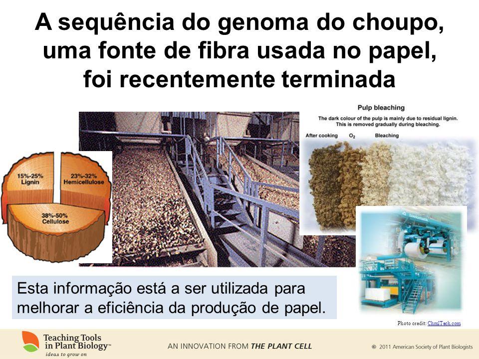 A sequência do genoma do choupo, uma fonte de fibra usada no papel, foi recentemente terminada Esta informação está a ser utilizada para melhorar a eficiência da produção de papel.