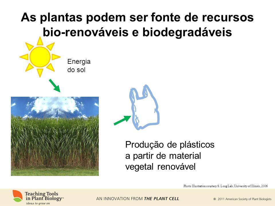 As plantas podem ser fonte de recursos bio-renováveis e biodegradáveis Energia do sol Produção de plásticos a partir de material vegetal renovável Pho