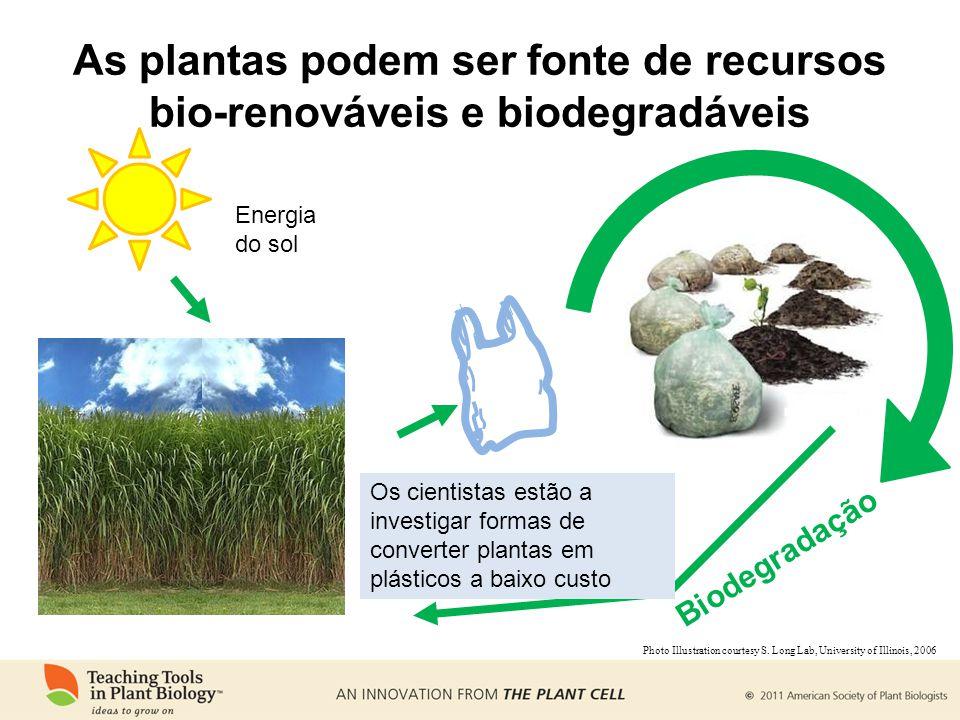 Energia do sol Biodegradação As plantas podem ser fonte de recursos bio-renováveis e biodegradáveis Os cientistas estão a investigar formas de convert