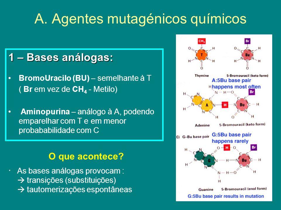 A. Agentes mutagénicos químicos 1 – Bases análogas: BromoUracilo (BU) – semelhante à T ( Br em vez de CH 4 - Metilo) Aminopurina – análogo à A, podend