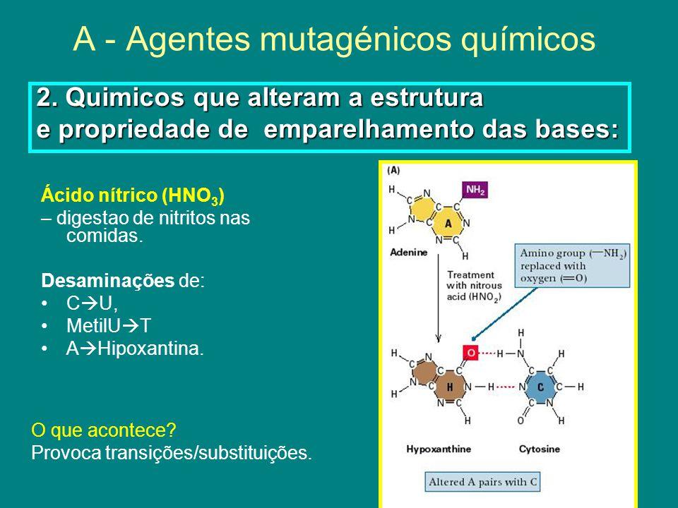A - Agentes mutagénicos químicos Ácido nítrico (HNO 3 ) – digestao de nitritos nas comidas.