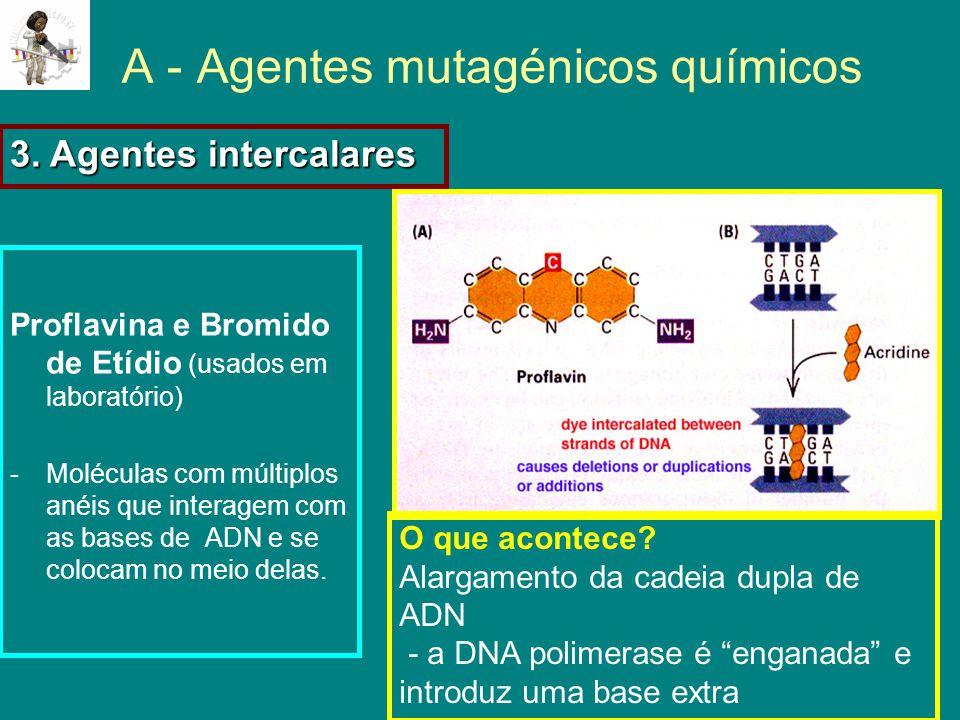 A - Agentes mutagénicos químicos Proflavina e Bromido de Etídio (usados em laboratório) -Moléculas com múltiplos anéis que interagem com as bases de ADN e se colocam no meio delas.