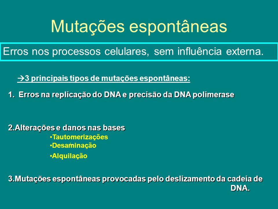 Mutações espontâneas 3 principais tipos de mutações espontâneas: 2.Alterações e danos nas bases Tautomerizações Desaminação Alquilação 1.Erros na replicação do DNA e precisão da DNA polimerase 3.Mutações espontâneas provocadas pelo deslizamento da cadeia de DNA.