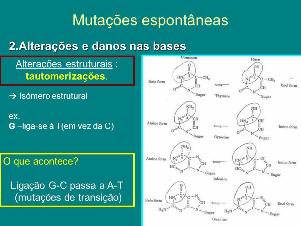 Mutações espontâneas Degradação espontânea das bases: Desaminação MetilCitosina-T Não existe mecanismo de reparação ( base pertencente ao ADN) MetC nos genes : hot-spot (zona de grande fragilidade) para mutações Transição mC-G T-A C U Processo reparação identifica a base U (não existente no DNA) Transição de C-G T-A