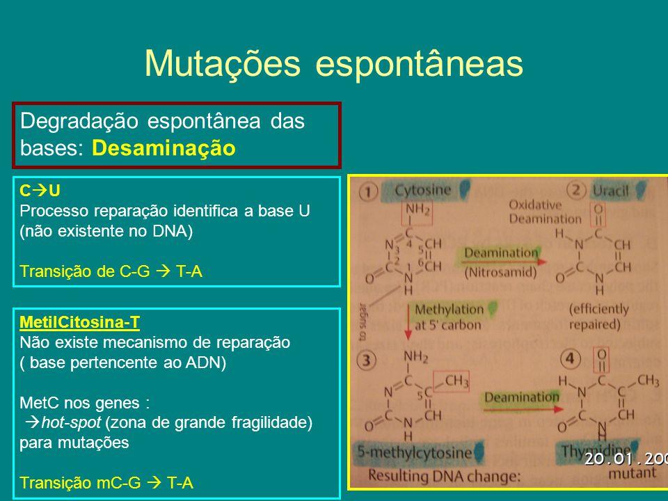 Mutações espontâneas Adição de grupos alquilos: Metil, Etil Propil – em bases ou no esqueleto açucar-fosfato O que acontece.