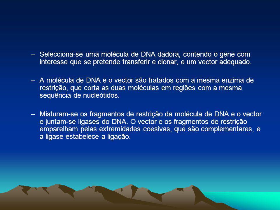 –O vector, contendo o DNA dador, é transferido para uma célula ou organismo receptor.