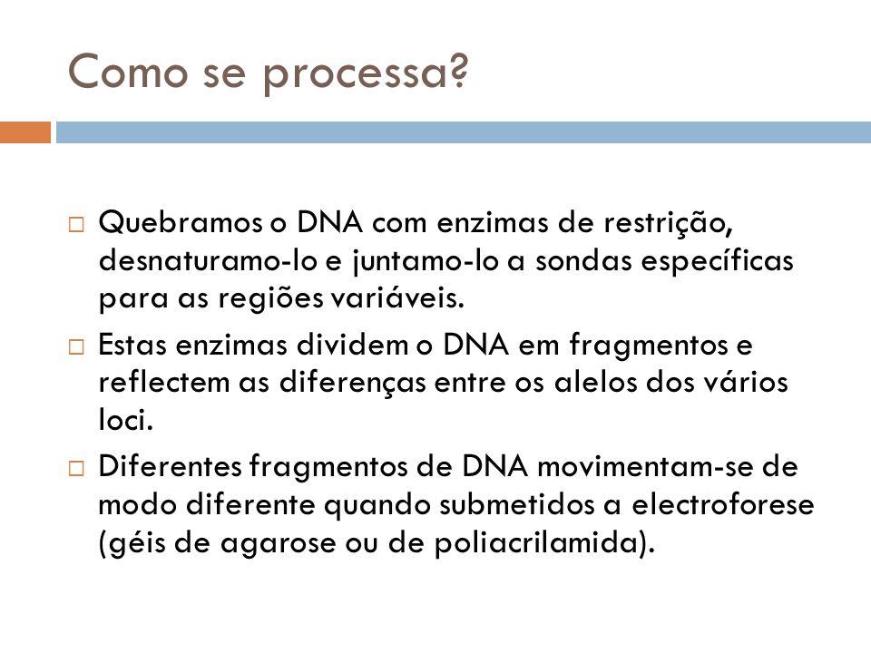 Como se processa? Quebramos o DNA com enzimas de restrição, desnaturamo-lo e juntamo-lo a sondas específicas para as regiões variáveis. Estas enzimas