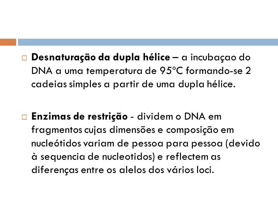 Desnaturação da dupla hélice – a incubaçao do DNA a uma temperatura de 95ºC formando-se 2 cadeias simples a partir de uma dupla hélice. Enzimas de res