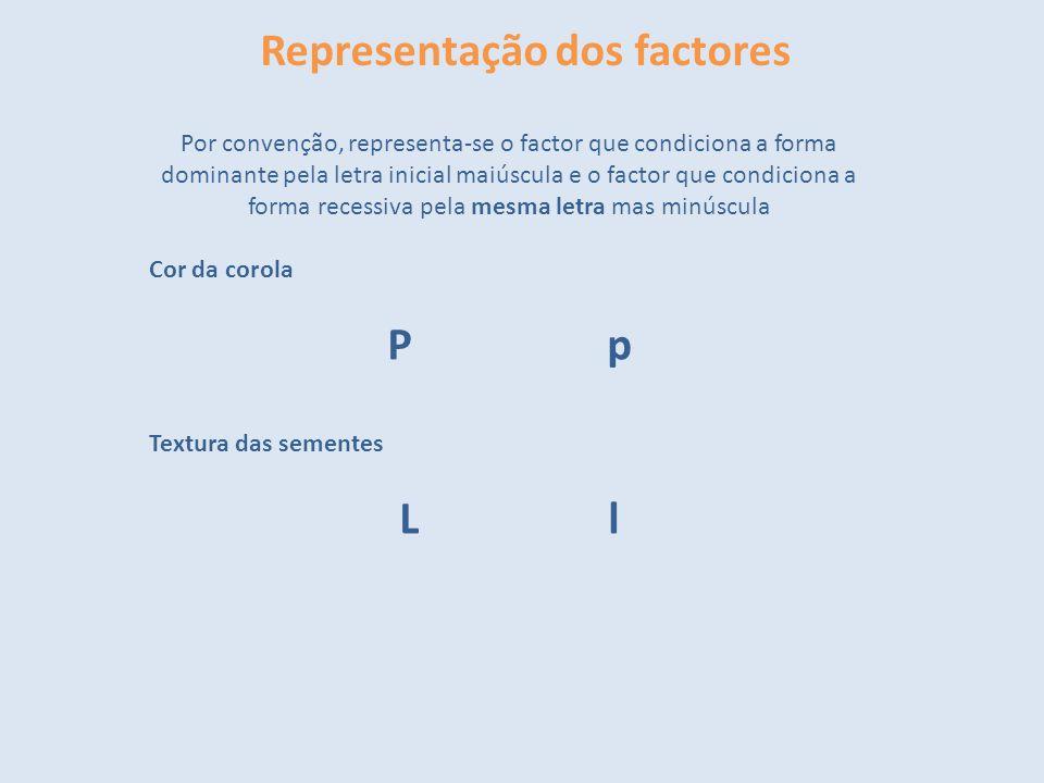 Representação dos factores Por convenção, representa-se o factor que condiciona a forma dominante pela letra inicial maiúscula e o factor que condicio