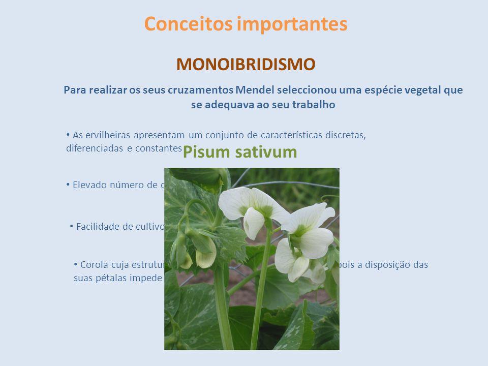 Conceitos importantes MONOIBRIDISMO Para realizar os seus cruzamentos Mendel seleccionou uma espécie vegetal que se adequava ao seu trabalho As ervilh