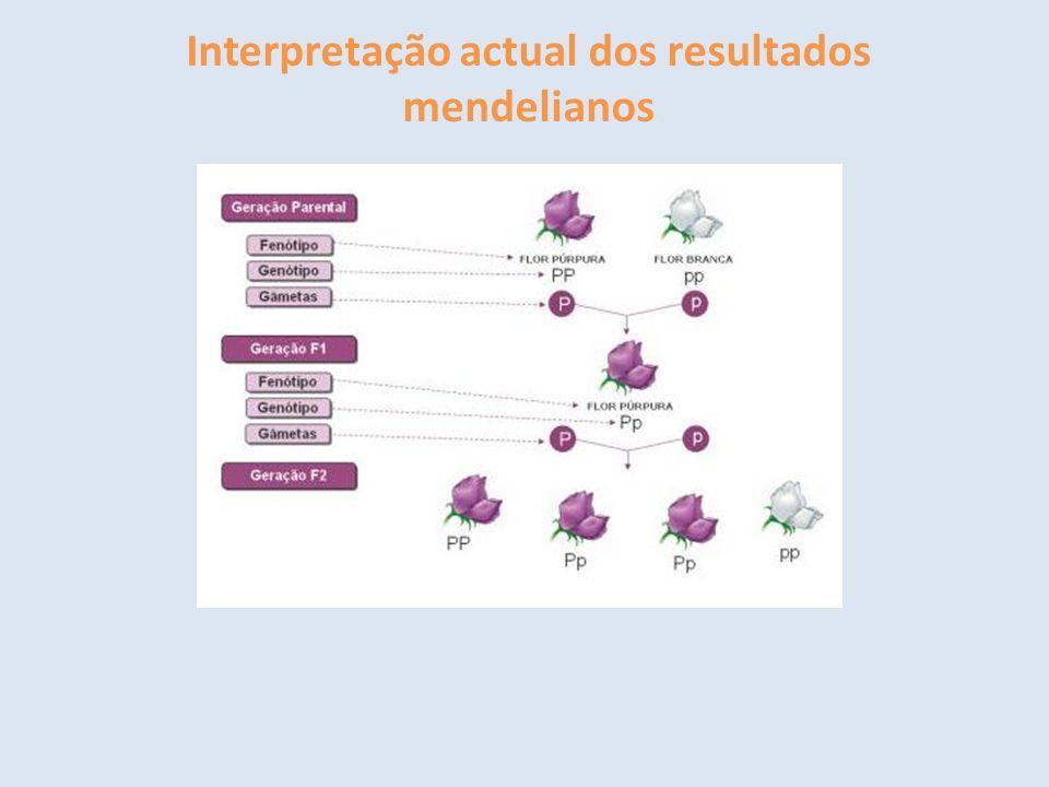 Interpretação actual dos resultados mendelianos