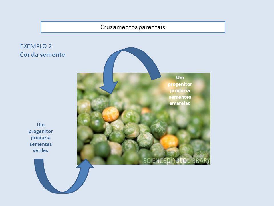 Cruzamentos parentais EXEMPLO 2 Cor da semente Um progenitor produzia sementes amarelas Um progenitor produzia sementes verdes