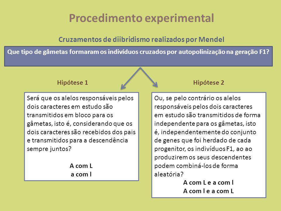 Procedimento experimental Cruzamentos de diibridismo realizados por Mendel Hipótese 1 Segregação dependente dos alelos X Amarela lisaVerde rugosa AALL aall AaLl AL al Geração P Geração F1 Cruzamento F1 Geração F2