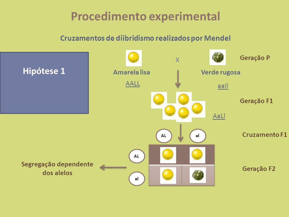 Hipótese 2 Segregação independente dos alelos X Amarela lisaVerde rugosa AALL aall AaLl ALalAlaL Al aL al AL