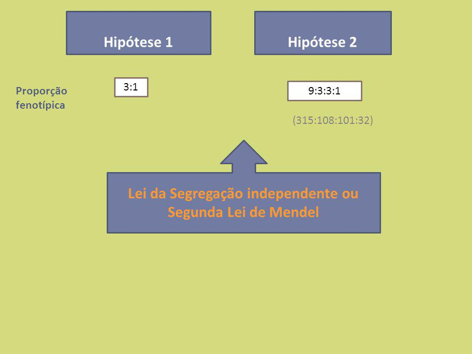 Proporção fenotípica Hipótese 1Hipótese 2 3:1 9:3:3:1 (315:108:101:32) Lei da Segregação independente ou Segunda Lei de Mendel