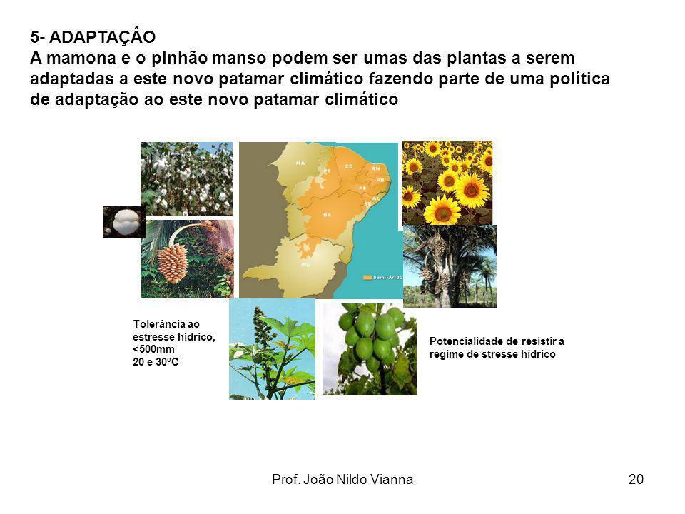 Prof. João Nildo Vianna20 Tolerância ao estresse hídrico, <500mm 20 e 30ºC Potencialidade de resistir a regime de stresse hídrico 5- ADAPTAÇÂO A mamon