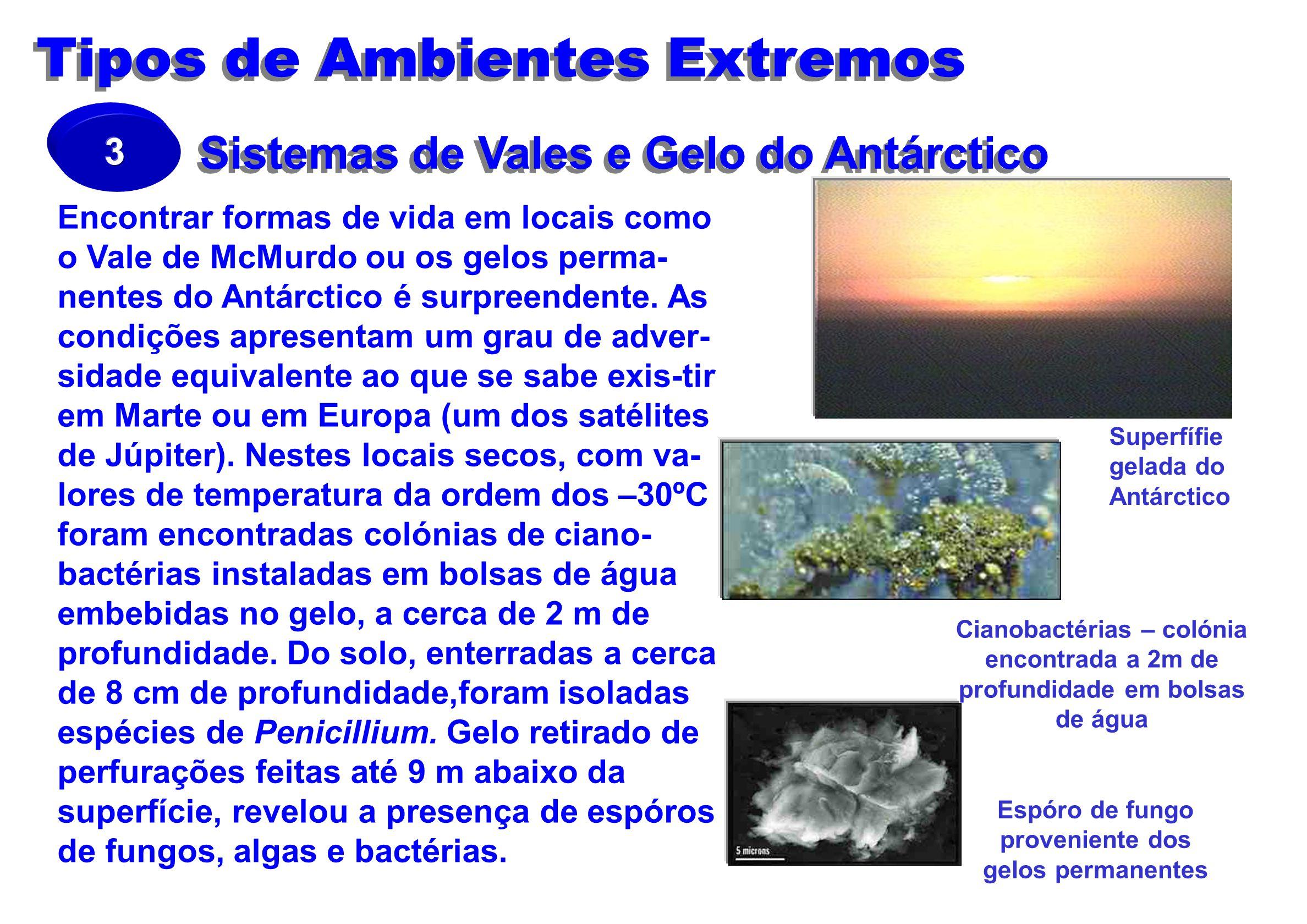 Sistemas de Vales e Gelo do Antárctico Encontrar formas de vida em locais como o Vale de McMurdo ou os gelos perma- nentes do Antárctico é surpreenden