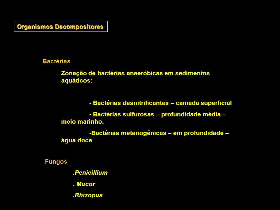 Organismos Decompositores Bactérias Zonação de bactérias anaeróbicas em sedimentos aquáticos: - Bactérias desnitrificantes – camada superficial - Bact