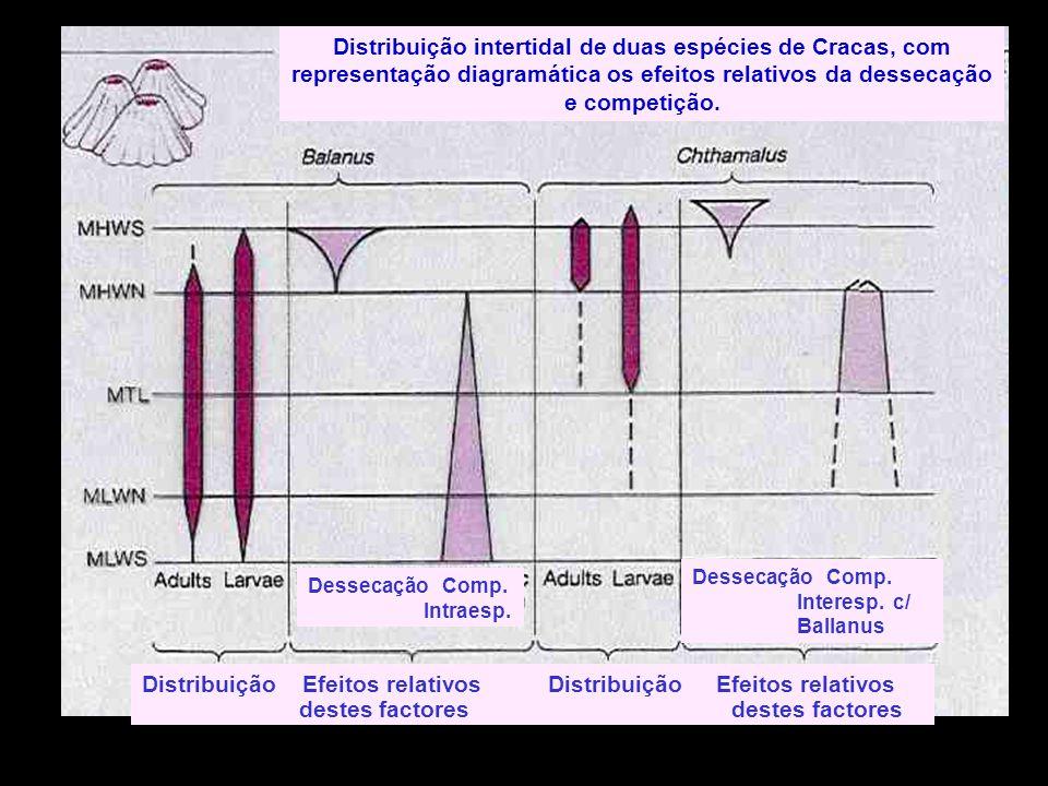 Distribuição intertidal de duas espécies de Cracas, com representação diagramática os efeitos relativos da dessecação e competição. Dessecação Comp. I