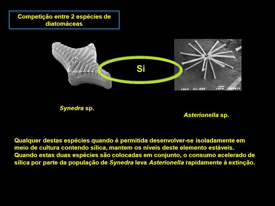 Competição entre 2 espécies de diatomáceas Synedra sp. Asterionella sp. Qualquer destas espécies quando é permitida desenvolver-se isoladamente em mei
