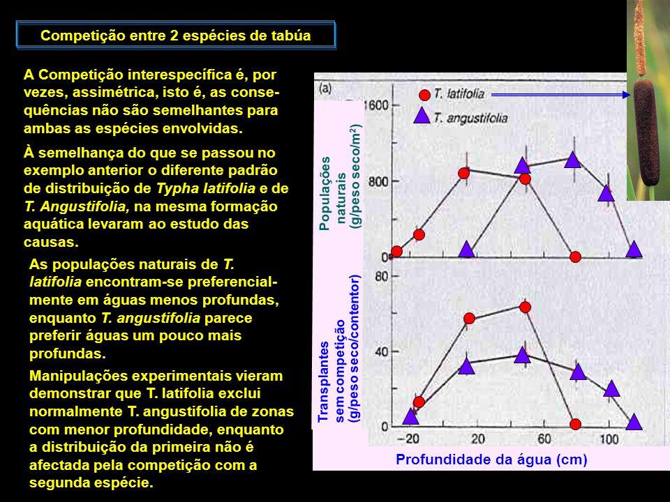 Competição entre 2 espécies de tabúa A Competição interespecífica é, por vezes, assimétrica, isto é, as conse- quências não são semelhantes para ambas