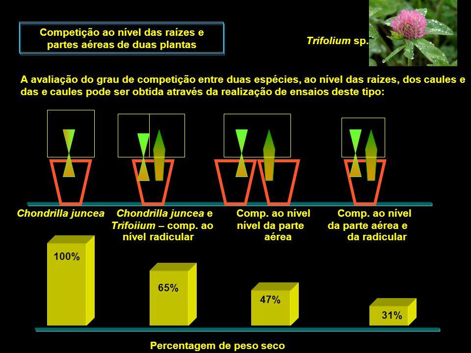 Competição ao nível das raízes e partes aéreas de duas plantas A avaliação do grau de competição entre duas espécies, ao nível das raízes, dos caules
