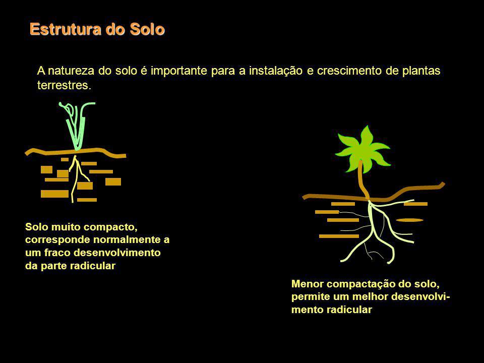 Estrutura do Solo A natureza do solo é importante para a instalação e crescimento de plantas terrestres. Solo muito compacto, corresponde normalmente